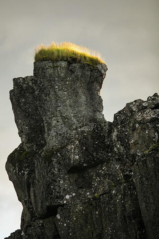 Grass in direct sunlight