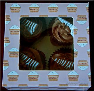 Square Box of Cakes