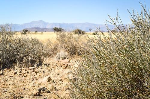 Montagnes dans la savane du Namib