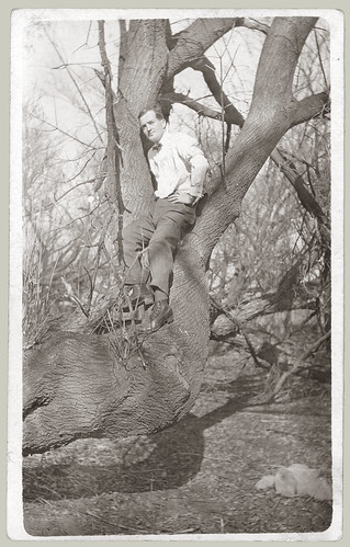 Julery man up a tree