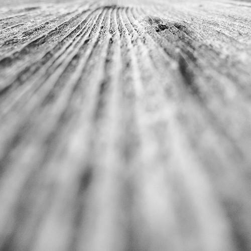 Wooden waves #holz #wood #igersaustria #igerspeace #igersburgenland #picoftheday