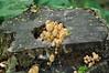 Mushrooms in tree