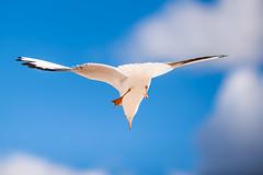 Seagull #244/365