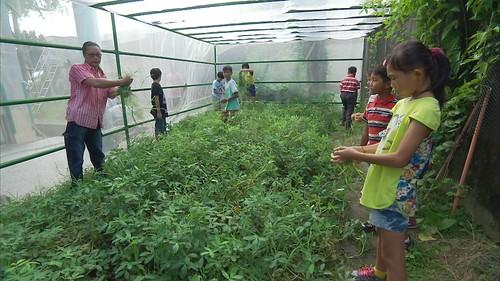 學生學習思考故鄉的環境問題