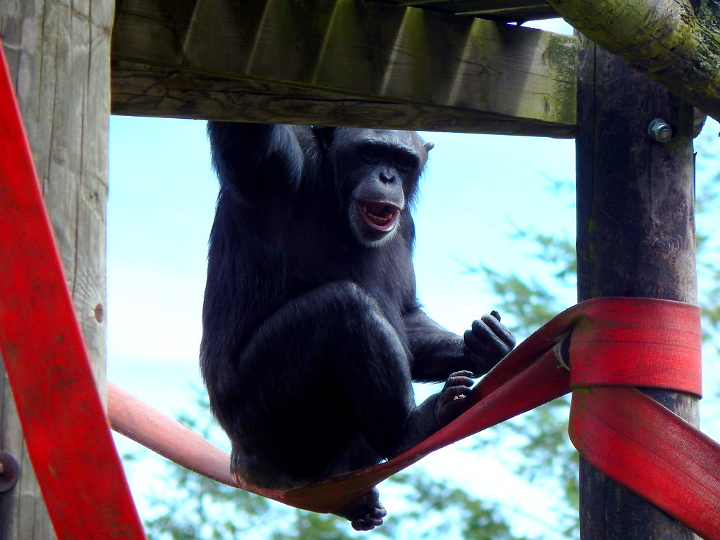 Themeparkmedia monkey world guide monkey world ape rescue centre a sciox Images