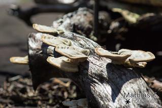 Pilze | Projekt 365 | Tag 268