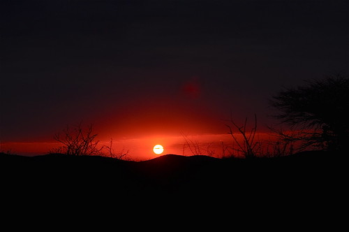 africa morning light red sun sunlight sunrise landscape dawn morninglight bush safari vegetation redsky namibia damaraland africansunrise