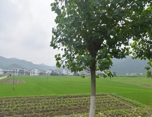 Jiangxi-Tunxi-Wuyuan-bus (3)