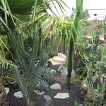 Kaktusgarten La Luna Baila
