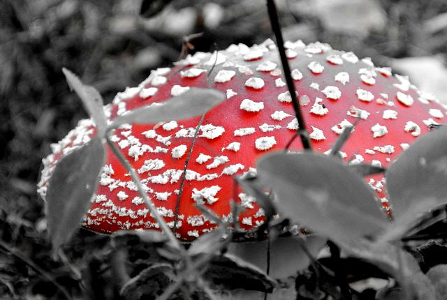 Autumn_9_2014_56