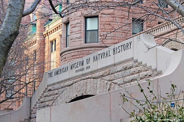 American Natural History Museum: musei gratis New York