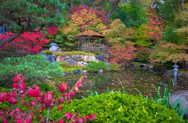Anderson japanese gardens fall colors flickr photo for Japanese garden colors