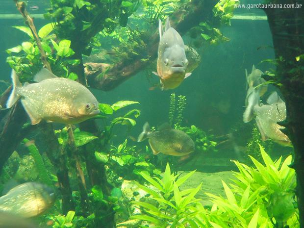 Sea Life London Aquarium 5
