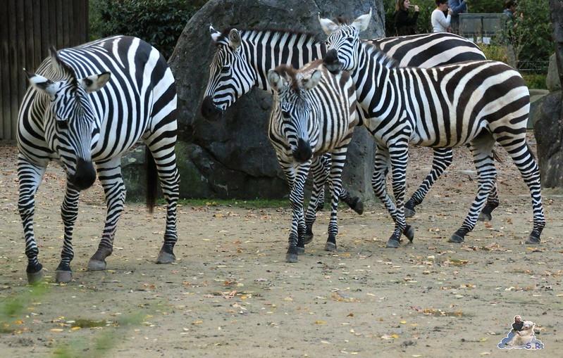 Berliner Zoo 26