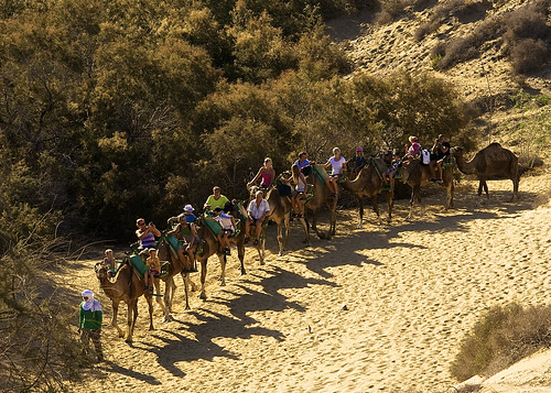 Camel ride in the Maspalomas desert
