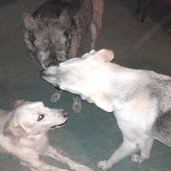 Jugamos pq estamos bañaditos y contentos! Bs Lucy, Jack y Mike