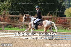 animal sports, equestrianism, english riding, eventing, dressage, mare, stallion, hunt seat, equestrian sport, equitation, horse,