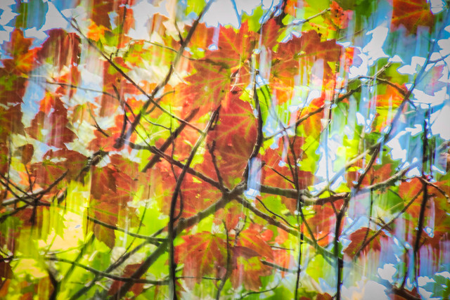 Autumn, Fall, Leaves, Colorful, Abstract, Tree, Branches
