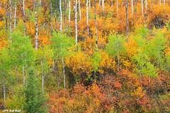 Autumns Arrival