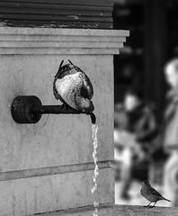 Žeđ - ptica