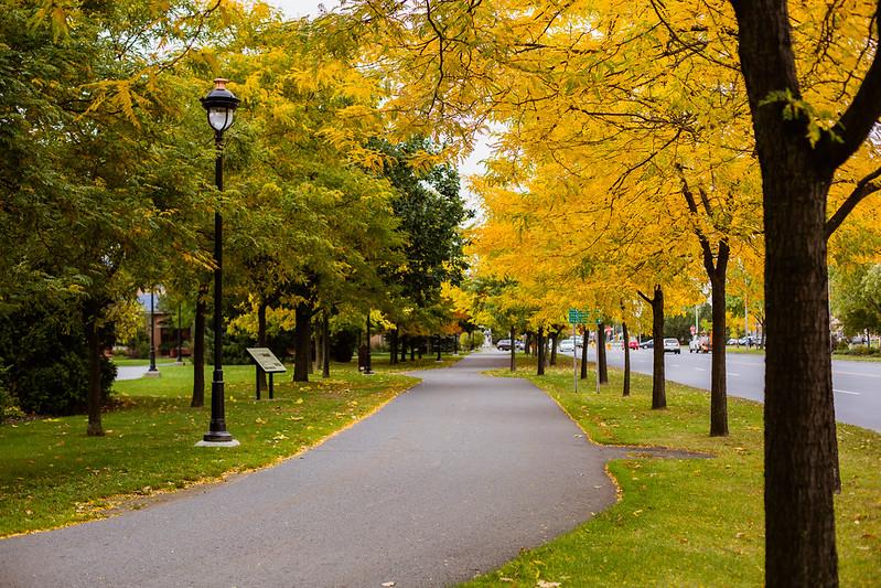 Arbres bordant le Parc linéaire des Bois-Francs, près de la Vélogare du Grand-Tronc.