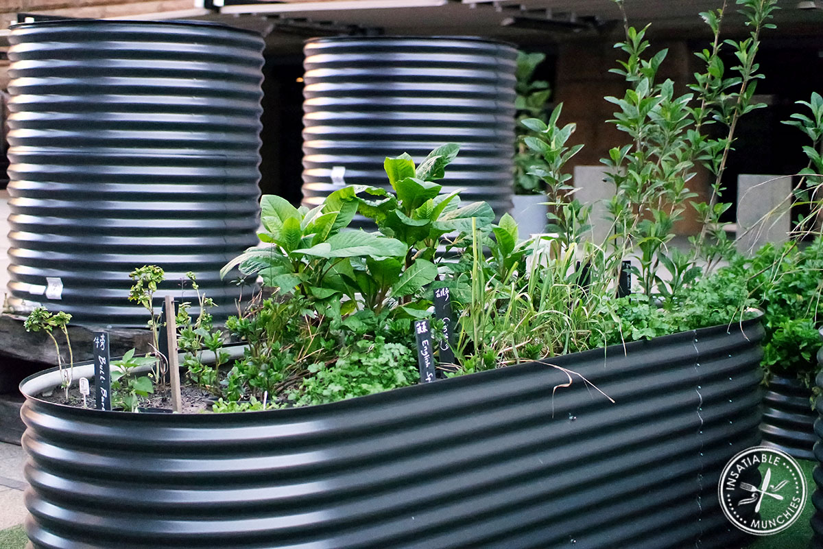 A large planter box of herbs and vegetables, part of the Museum of Sydney Celestial Tables Exhibition