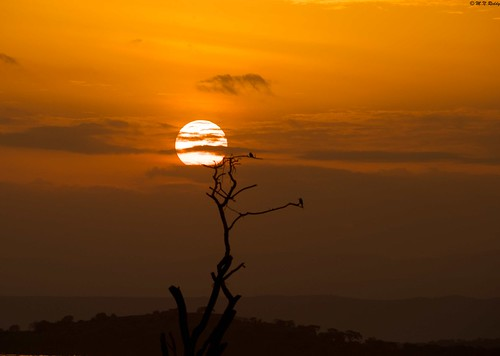 africa kenya lakebaringo goldenlighting sunsettingandsunrising
