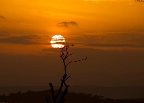 africa kenya lakebaringo goldenlighting sunsettingandsunrising