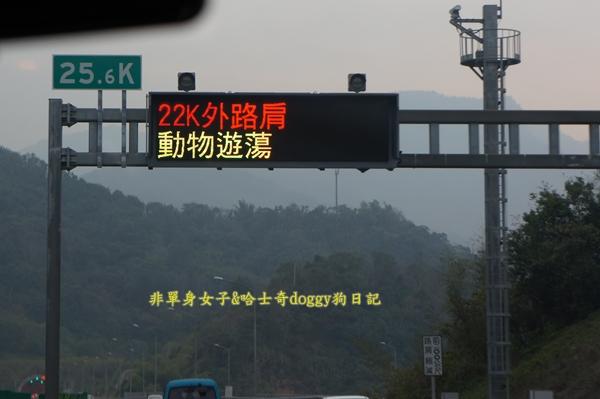 萬大水庫發電廠台電宿舍櫻花23