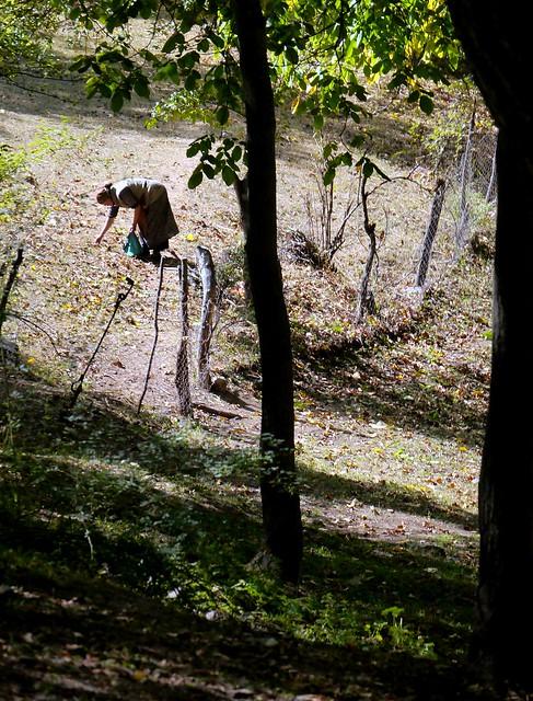 05) Walnut Harvest