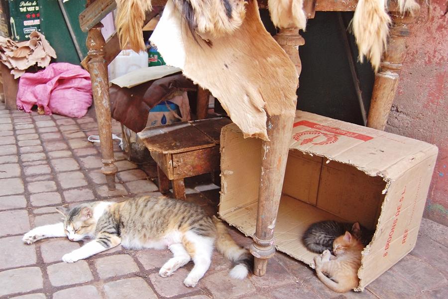 Souk Marrakech (9)