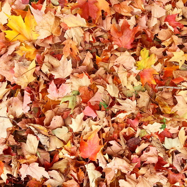 Favorite time of year. #fall #autumn #leaves