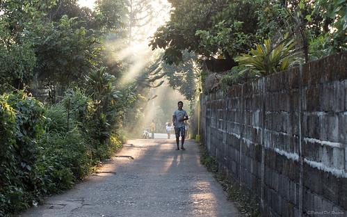 road street morning trees light sunlight man green wall sunrise philippines streetphotography cavite province sunbeams silang