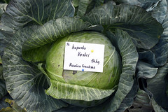 brassica(0.0), collard greens(0.0), cabbage(1.0), vegetable(1.0), leaf(1.0), green(1.0), produce(1.0), food(1.0),