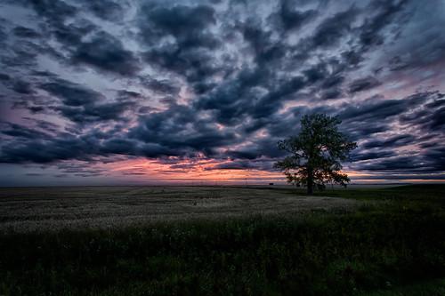 canada manitoba prairie aubigny prairiefields