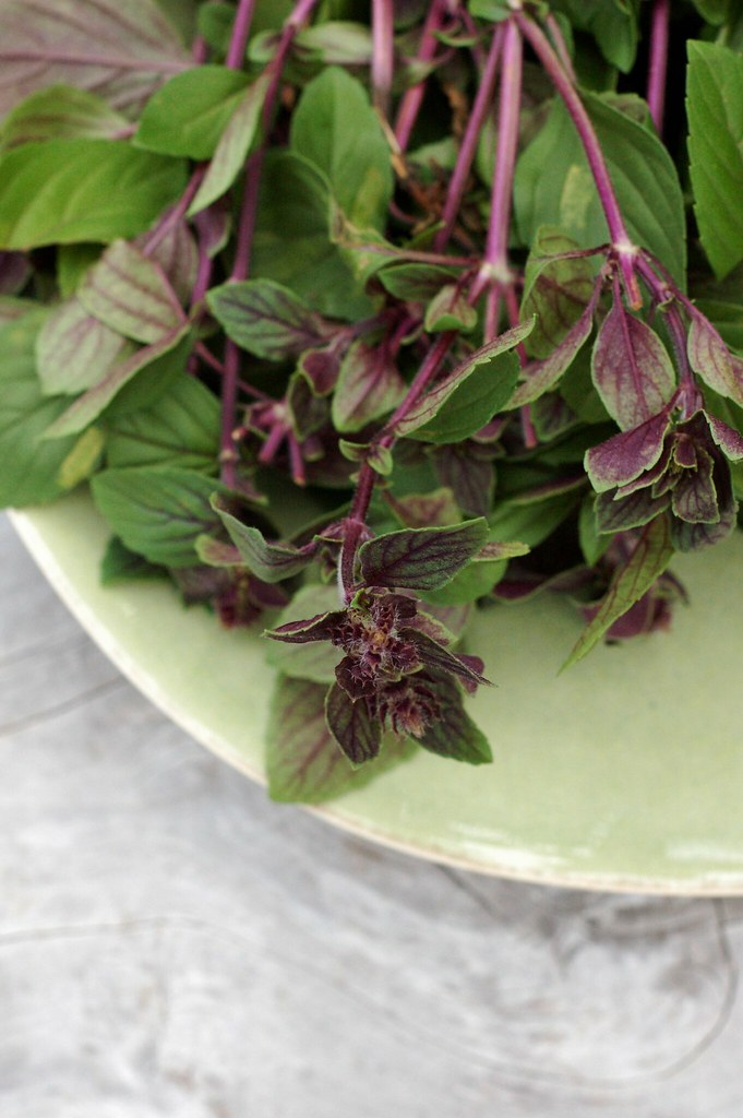 Basil by Eve Fox, The Garden of Eating, copyright 2014