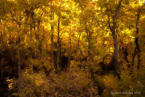 autumn trees light fall leaves yellow forest canon eos rebel golden utah hiking canyon trail spencer hdr t3i bawden littlecottonwood softglow spazoto