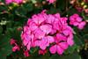 Flower Bouquet, Limeni, Greece