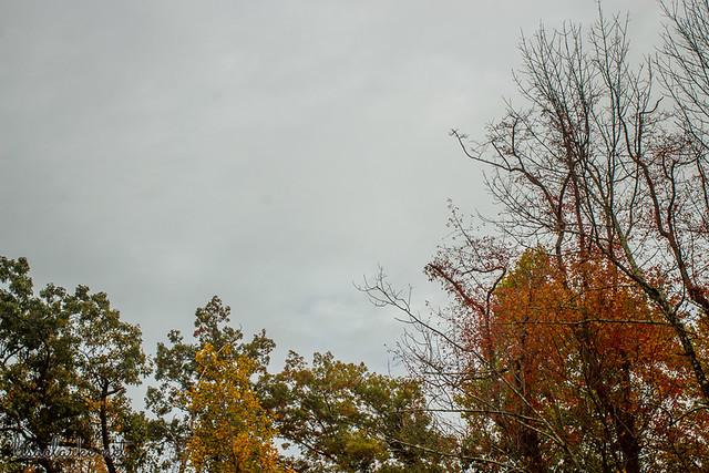 Fall 13/31