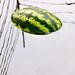 Watermelon...summer by MahshidSohi