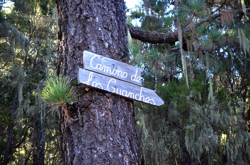 The Guanche Way, La Orotava