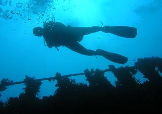 "<img src=""padi-diving-marine-park-tioman-island-malaysia.jpg"" alt=""PADI, diving The Marine Park, Tioman Island, Malaysia"" />"