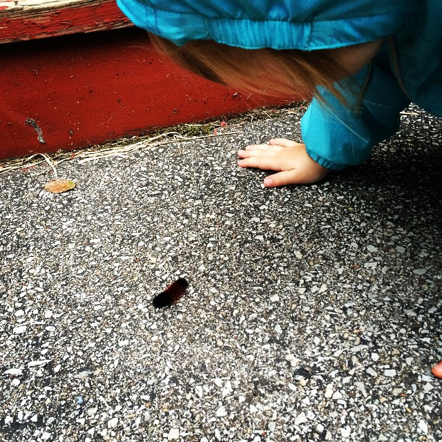 Maddy meets a fuzzy caterpillar.
