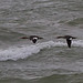 pomarinejaeger has added a photo to the pool:Red-breasted Mergansers, Lighthouse County Park, Huron Co., MI; crappy pic solely for eBird documentationebird.org/ebird/view/checklist?subID=S19864506