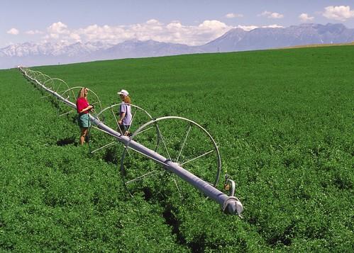 China's dairy industry has seen the benefits of U.S.-grown alfalfa hay thanks to the Cochran Fellowship Program. (Photo credit: USDA-NRCS)