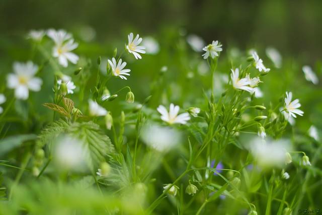 ...fleurettes...