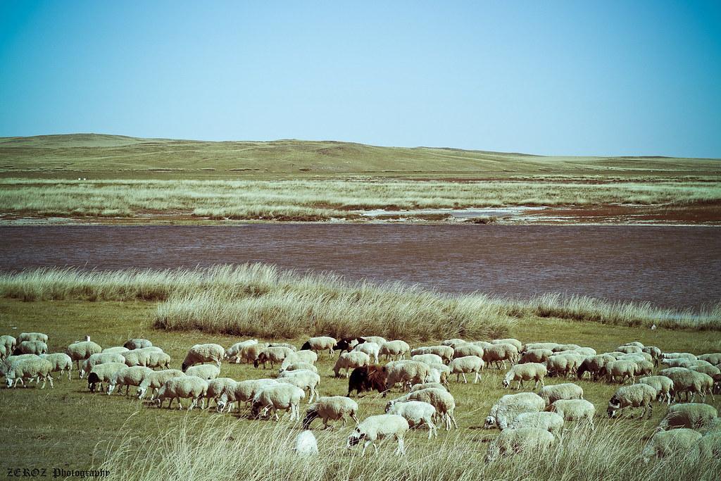 內蒙古‧印象1876-59-2.jpg
