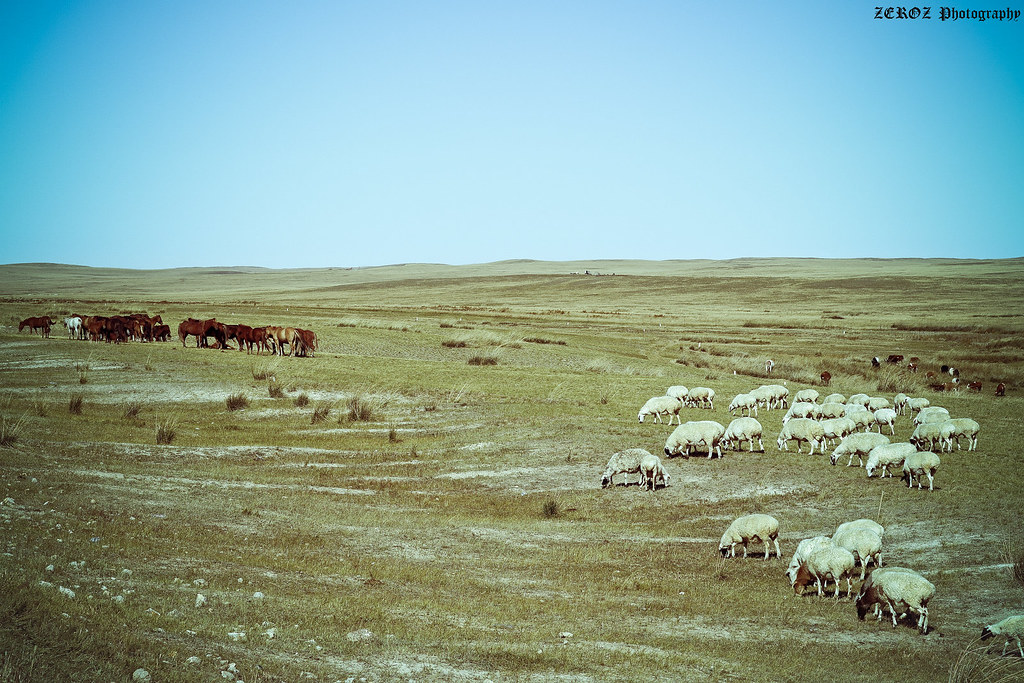 內蒙古‧印象1880-53-2.jpg