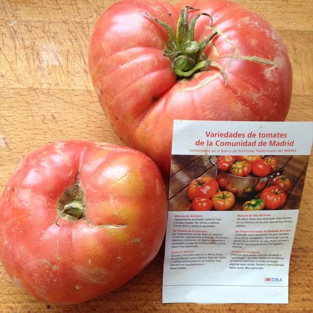 Todavía podemos disfrutar de buenos #tomates (variedad Olmeda de las Fuentes) #Madrid