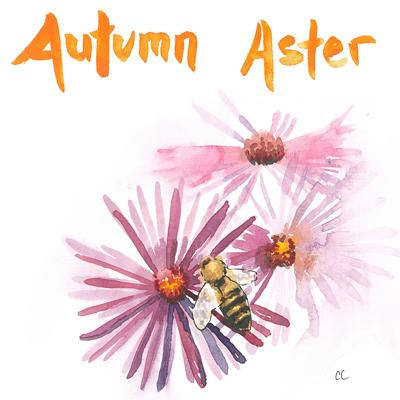 20141002_bee_and_aster_sketch